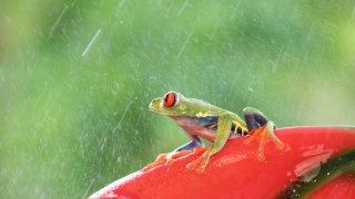Récit d'un voyage au Costa Rica en «saison verte»