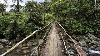 Foret de Rara avis au Costa Rica