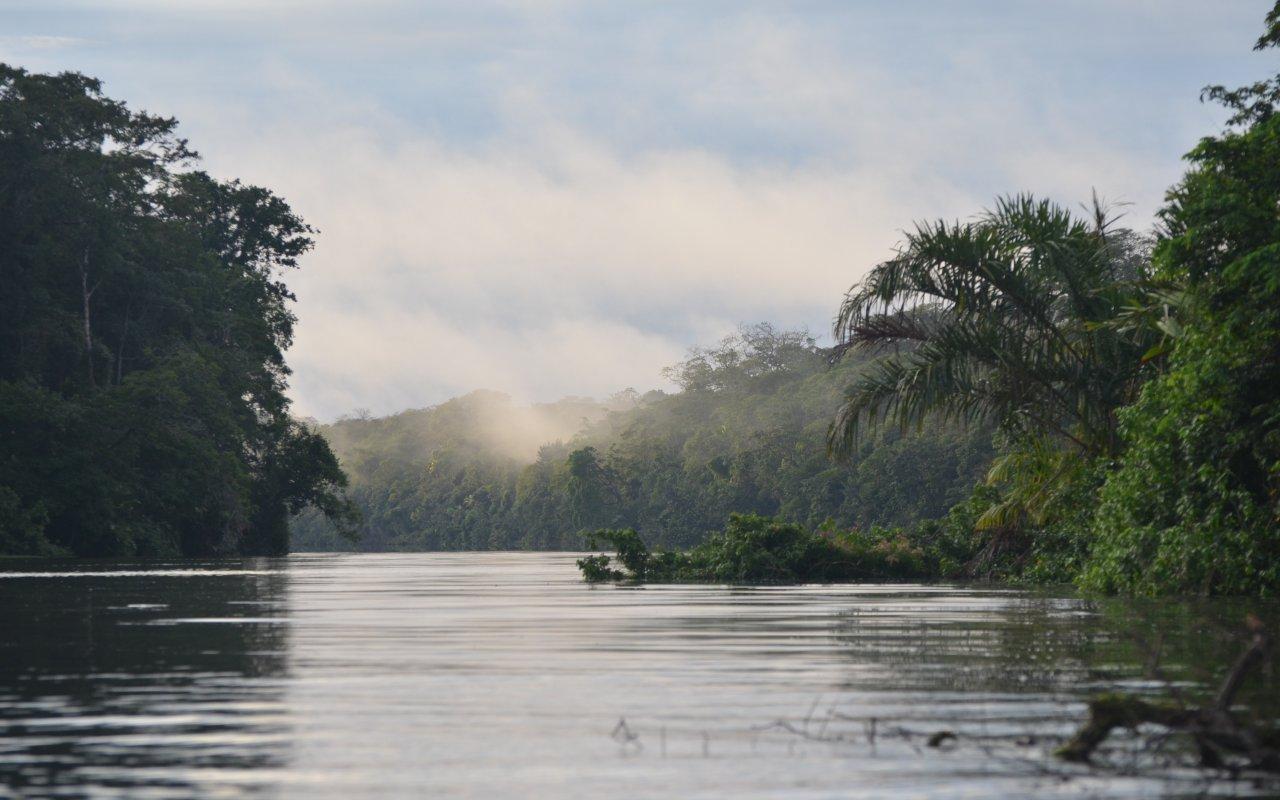 rivière Tortuguero à l'aube, avec ses nappes de brouillard, son eau calme, sa jungle