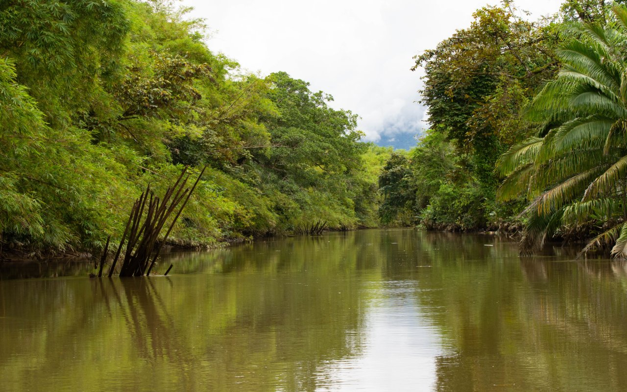 Mangrove de Sierpe, Costa Rica