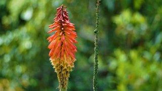 Agro-écologie au Costa Rica