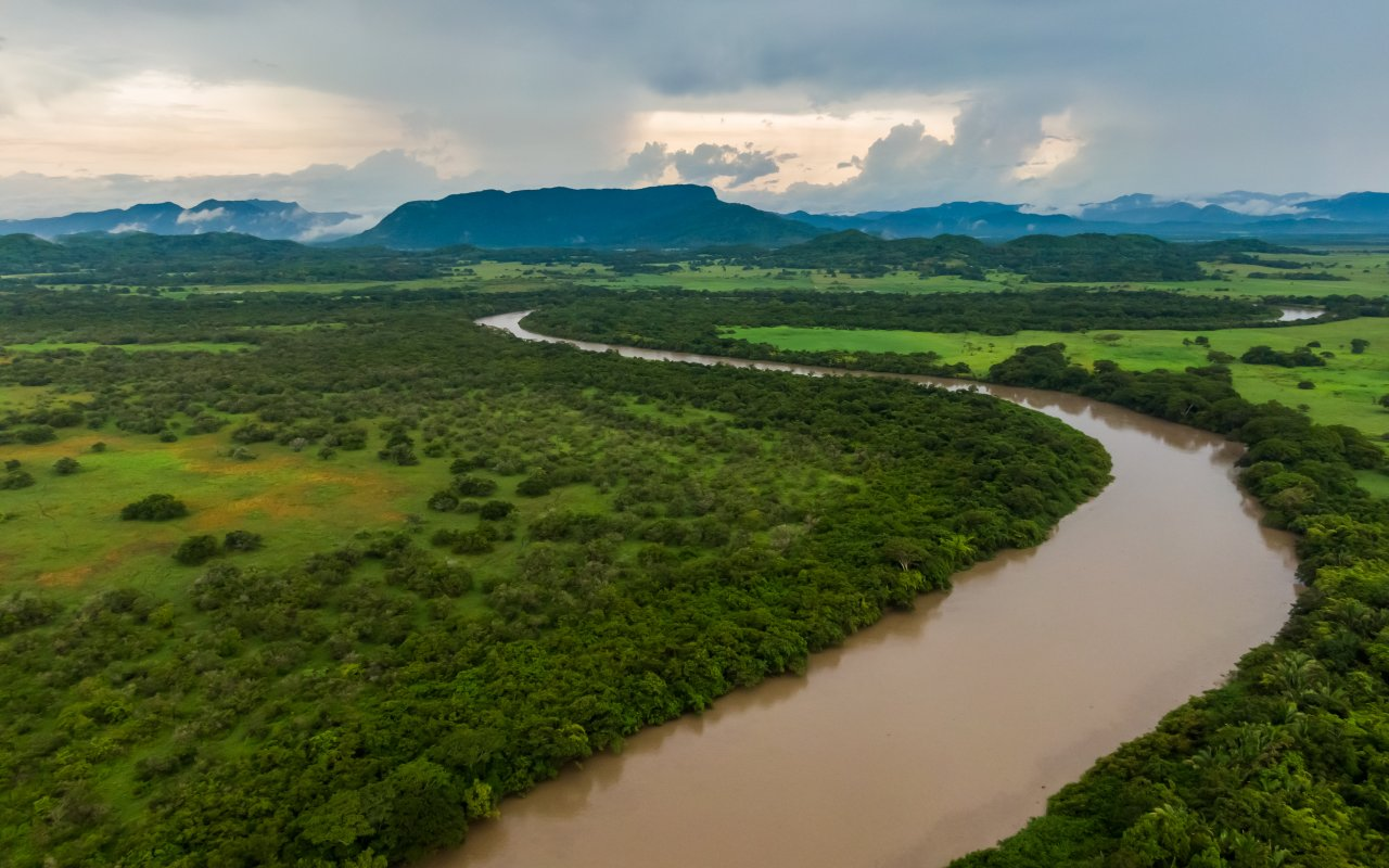 Palo verde au Costa Rica