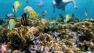 Snorkelling au Costa Rica