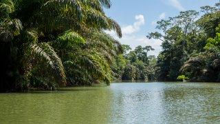 Riviere de Tortugero au Costa Rica