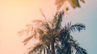 Bocas del Toro, une interlude tropicale dans un cadre paradisiaque