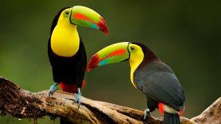 Le Costa Rica en liberté