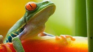 L'écotourisme au Costa Rica