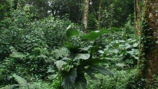 Le Costa Rica : un modèle pour l'écotourisme