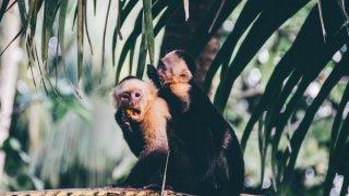 Mon voyage à travers l'écosytème du Costa Rica