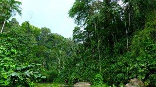 J'ai tenté un stage de survie dans la jungle du Costa Rica