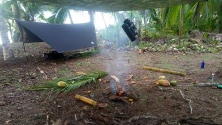 survie jungle de corcovado