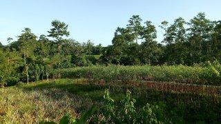 reserve naturelle sarapiqui