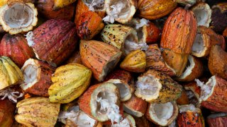 Cacao du Costa RIca