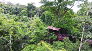 tree house maquenque