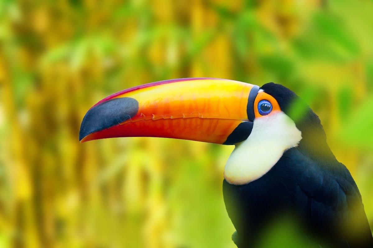 Infos pratiques sur le Costa Rica